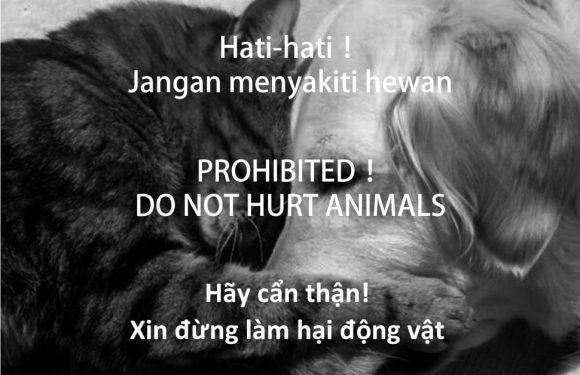 小心!! 保障工作權,傷害貓狗會坐牢